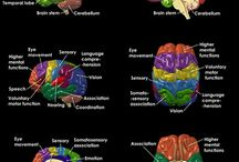 The Universe of the Brain