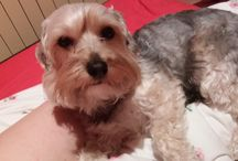 Lüszi kutyus szavazás / szia segítenél a szavazásban?likelnád a kutyusunkat?https://m.facebook.com/doglikeuk/photos/a.603650906390340.1073741825.580449018710529/770834203005342/?type=1&source=43