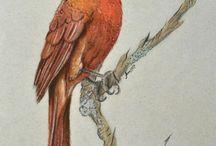 pássaros pintados a mão(giz pastel seco e oleoso)