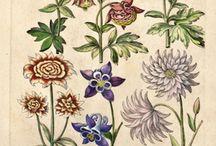 flora print