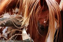 Horses  / by Holly Rowe