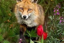 Maravillosos Animales