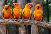 Let's Talk Birds Parrots / Parrot Pics - photos of beautiful parrots from around the world