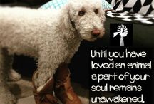 Dogs / Loving a Dog is the best Love you can have. Roslyn Uttleymoore Nutritionist, Photographer, Lover of Dogs