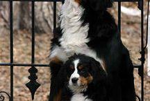 Cachorros / De perros y gatos