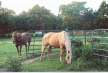 My Horses / These are some of our babies we have raised on WWR In Oklahoma