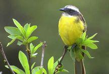 Bird--Uccelli