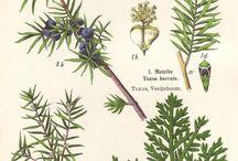 Stampe botaniche