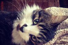 Koty // cats // cat / Kicie