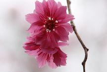 și alte flori.....