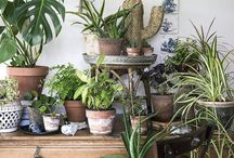 Living with plants / Indoor plants and greenery