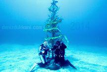 Yeni Yıl / Evet yeni yıla geri sayım başladı ve yılbaşı ağaçlarımızı hazırladık bile : ) #denizisevkeyfinisur