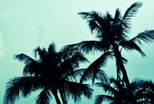 Palm Trees / by Lisa Dworkin