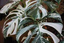 gröna växter med annorlunda blad eller växtsätt