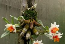 I Love Orchids / Care and display of beautiful orchids.