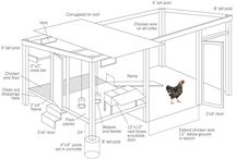 All About Chickens / How to raise backyard chickens, which breeds are right for you, and more.