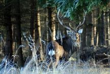 DELUXE HUNTING-TOURIST TRIPS / FOR YOUR TOP CLASS HUNTING-TOURIST TRIP IN THE CZECH REPUBLIC