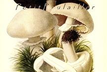 Vintage Botanicles