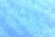 **⏺⚫  ⏺       Голуба ⏺     blue