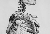 Bones of the Human Body / Anatomical resources that would be useful for teaching about bones