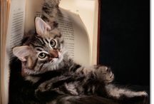 Books & More   / by Lynn Morris