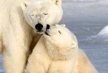 Polar Bears / by Pauline Navarro