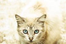 Animal Lovers / by Roxy Hard