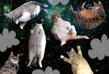 Beautiful kitties / by Susan Daw