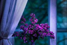 purple + blue