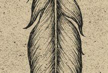 Feathers / Перья