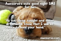 Good Night SMS Messages / The best messages you need to send to your loved one for a good night.