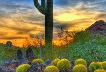 Beautiful Scottsdale / The unparalleled beauty of Scottsdale, AZ.