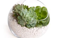 plants and succulents / by Nancy Dawes