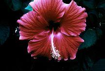 Flores / cores e aromas...