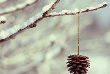 Winter Wonderland / by Kerrie Tatarka