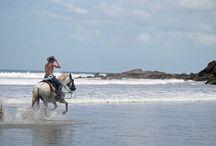 Saddles to Svassana Yoga Retreat - Horseback Riding / NicaraguaYogaInstitute.com  Yoga Retreat & Horseback Riding Retreat Pins