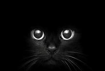 Bianco e nero - Black and white