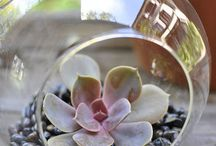 For my little terrarium / by Megan Hively