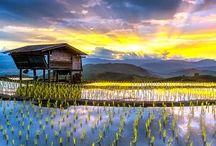 Rice Terraces & Fields