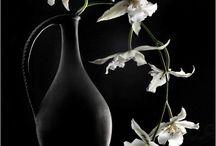 Fleurs clair obscur