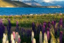 NZ / Ideas for my 6 months in NZ!