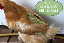 Chicken Love / All chickens speak with a British accent and love to look beautiful...