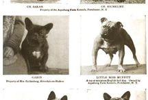 Oude platen Franse Bulldog