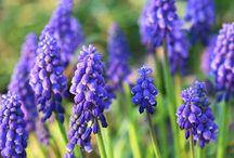 Flowers:Garden