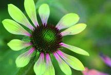 Flowers / by Deb Stawicki