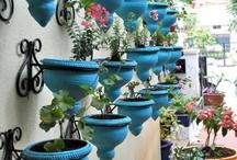 Gardening / by Amanda Blackburn