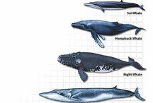 Baleias da minha vida