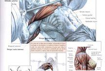 Body-work / Avances workout