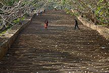 A future holiday  / tea plantations, elephants, fresh fruit and quiet sunshine