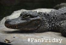 #SCZFanFriday / These are photos shared by our fans!  We pick one each week to highlight and share. / by Sedgwick County Zoo